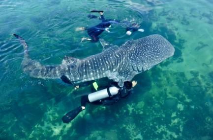 观赏海豚,鲸鲨等海洋动物,在分界洲可以进行各类团队建设活动,如海上